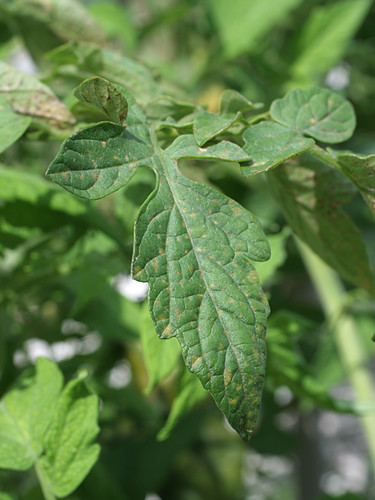 Leaf-Spot-Halted
