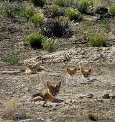 Fox Family, Milford