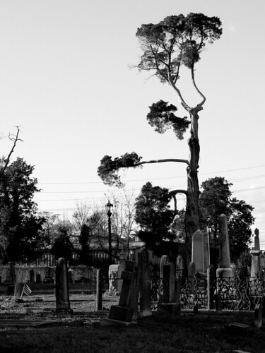 Elizabeth City - Cedar Tree and Tombstones on Shepard Street (B&W)
