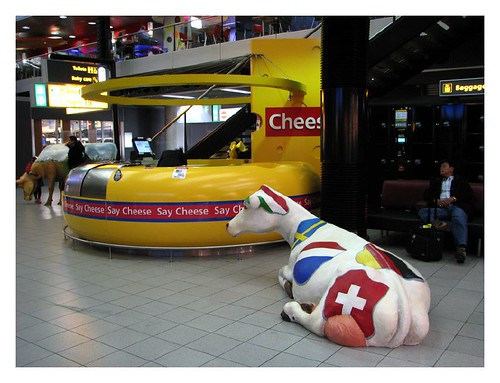 Cows and cheese at Schiphol Airport by you.