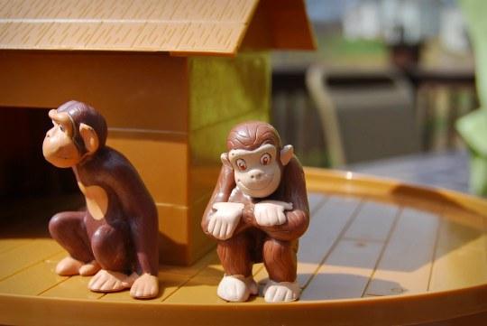 Monkeys on the Ark
