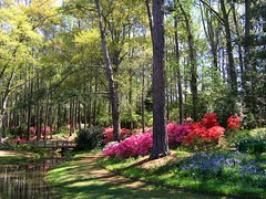 Early April in Georgia´s Callaway Gardens