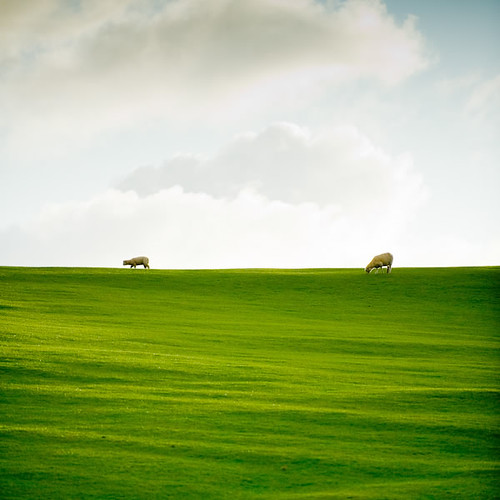 New Zealand / Grass / Farm por ►CubaGallery