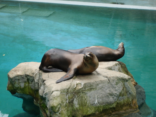 sea lions-8