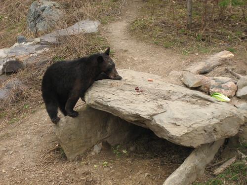 lucky bear