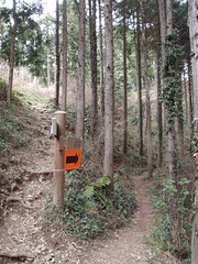 Test run for Ome-Mt. Takamizu trail run