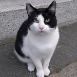 哥斯拉的貓