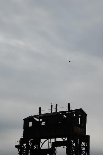 This bird had flown