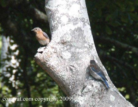 DSC_1013ABCD-2BB-In-Tree-1