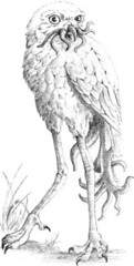 owl-thing