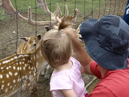 Daddy showing tilly the deer