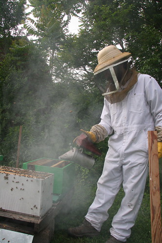 smoking the second hive