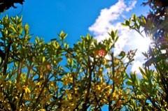 Sunny Hedge