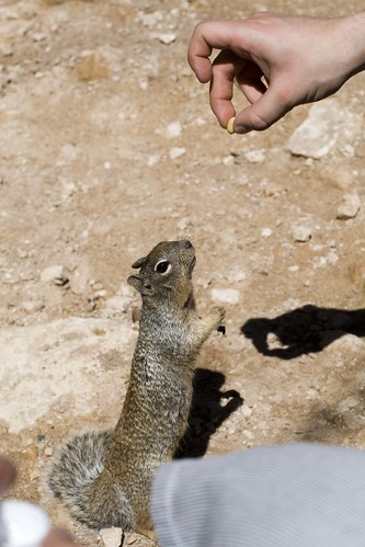 Nuts for you!