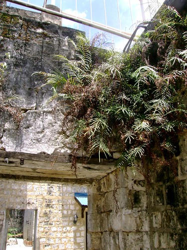 The only vegetation I found inside the prison hall