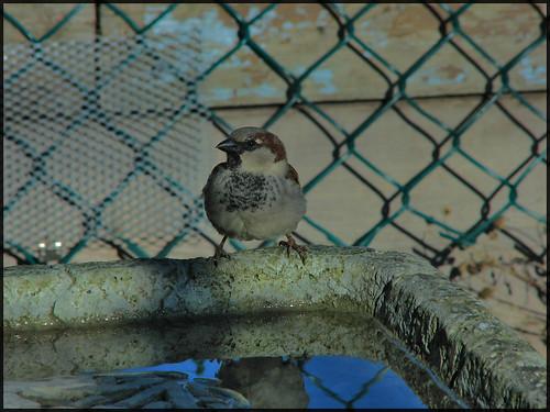 BIrd on the Bath