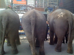 Elephant Butts