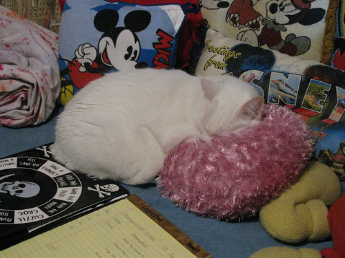 White Cat on Pink Pillow . . . Again