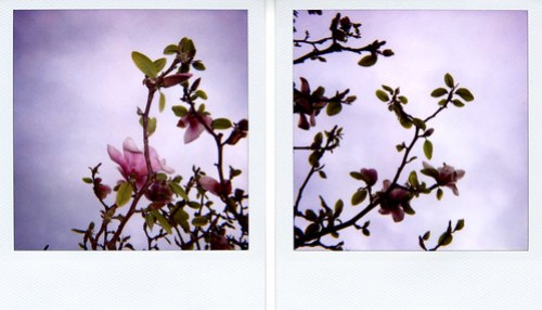 'roid week 2009: As the sky bursts into flower