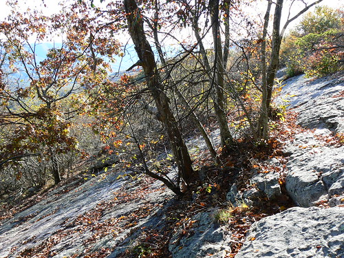 Sinking Creek Mountain - Trees on Slanty Slope