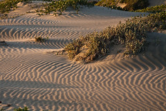Shadow patterns on drifting sand dunes before ...