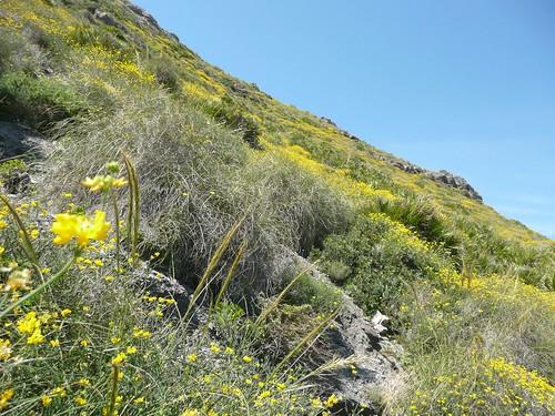 Parque Regional de Calblanque en primavera - Murcia