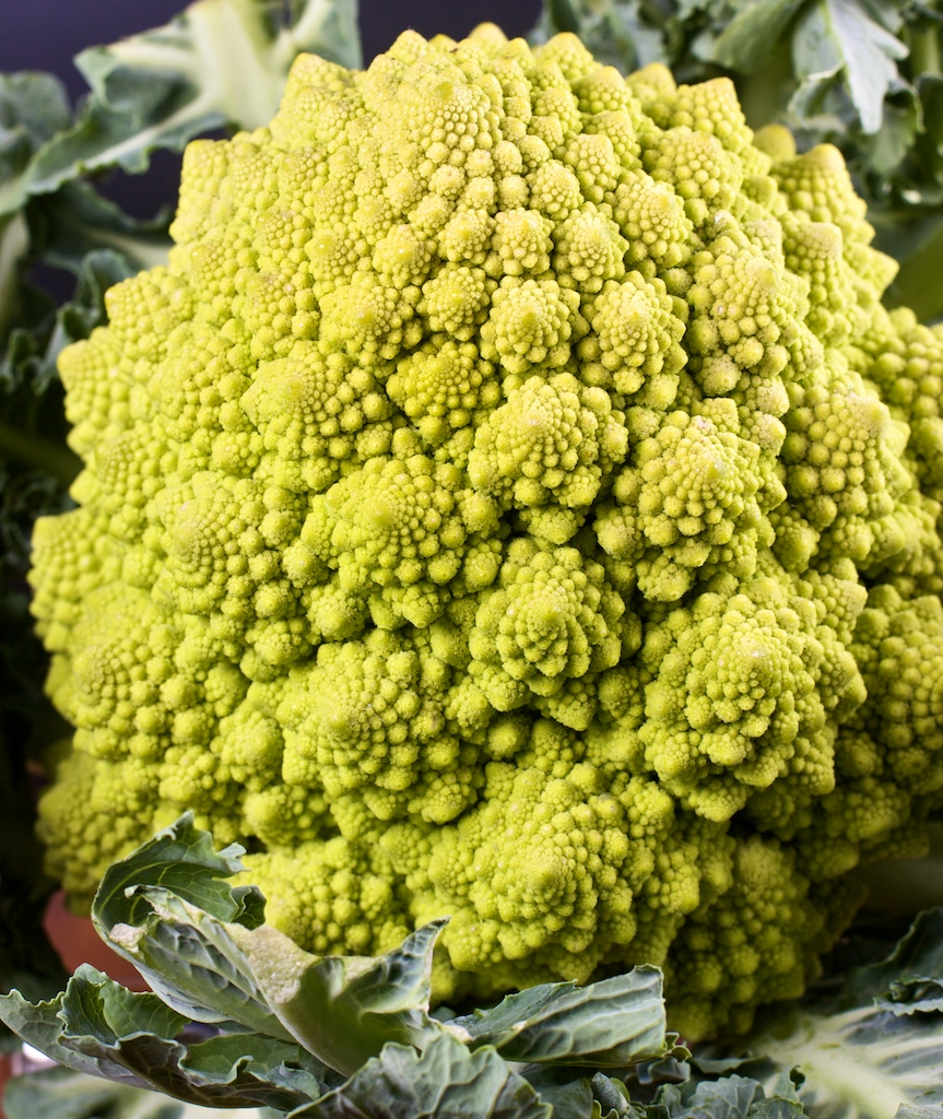 A Fractal Vegetable, Romanesco Cauliflower