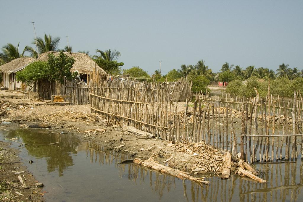 IMG_0187 terraplenes sobre manglar