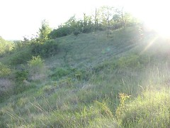 Calcareous slopes