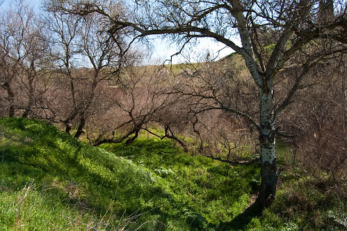 Las orillas del Henares (III)