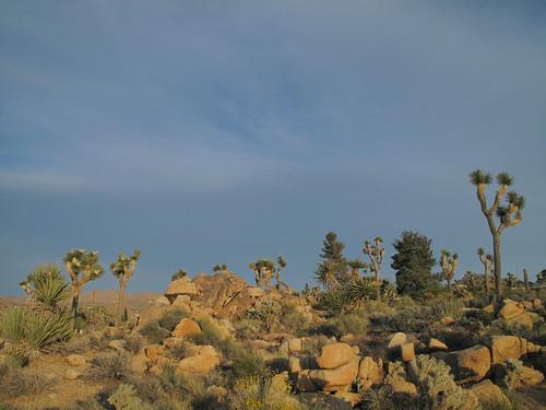 Natural Desert Garden by you.