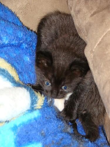 kitties 28 (1)