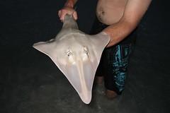 Sand-Shark at Emu Bay Beach