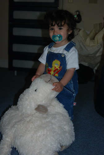 18 Month Sheep Photo