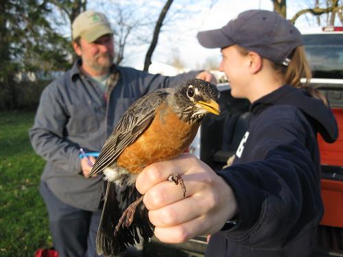 AMRO - First bird of Spring 2009 Banding at Audubon