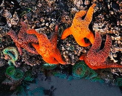 Starfish & Barnacles
