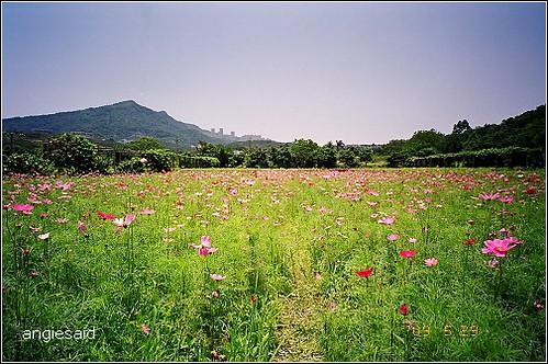 b-20090529_natura114_030.jpg