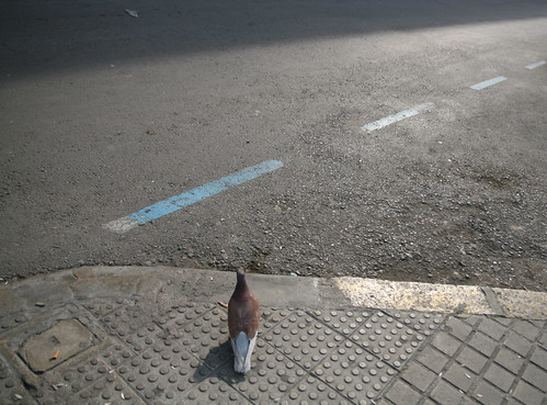 Pigeon About to Cross the Street