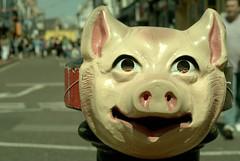 Swine Laine