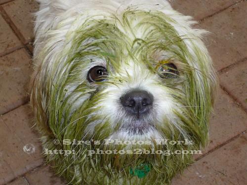 Zak The Green Dog