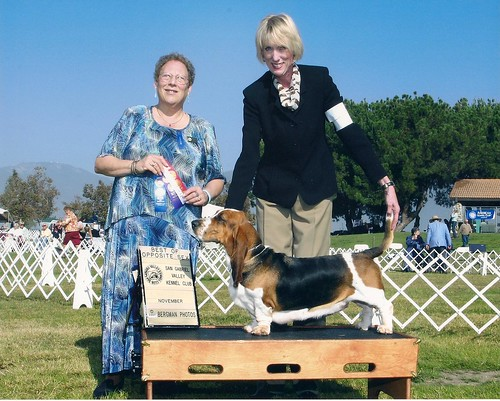 "The Dam Crossroads Bassets  AKC Champion Mississippi Mud ""Missy"""