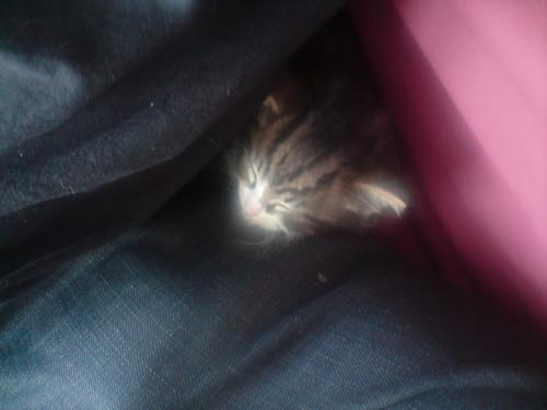 Emo finds a snuggle space