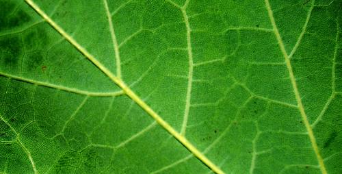 Leaf Texture 04