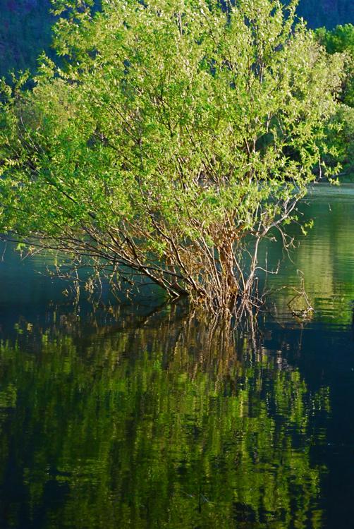 Clark Fork River backwater