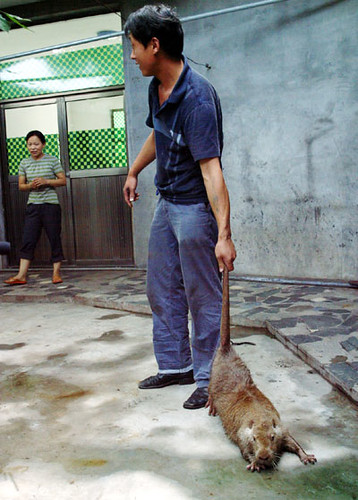 Xian e o Rato Gigante
