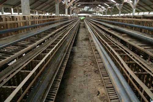 Sebagian besar kandang-kandang ayam di desa Senganan, Tabanan, Bali kosong karena ayam ternak mati dalam jumah besar karena virus yang diduga flu burung H5N1