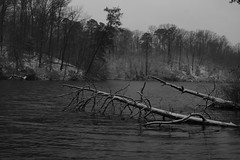 Melody of a fallen tree