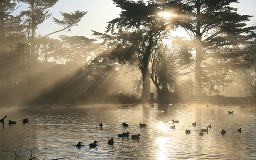 Nature Crepuscular Rays in Golden Gate Park
