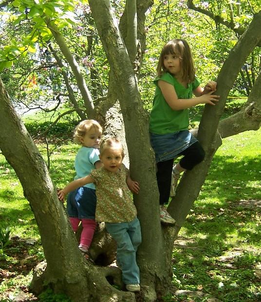 climbin_a_tree