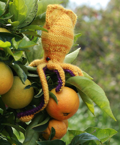 Sid hangs out with ripened oranges and well watered succulents.